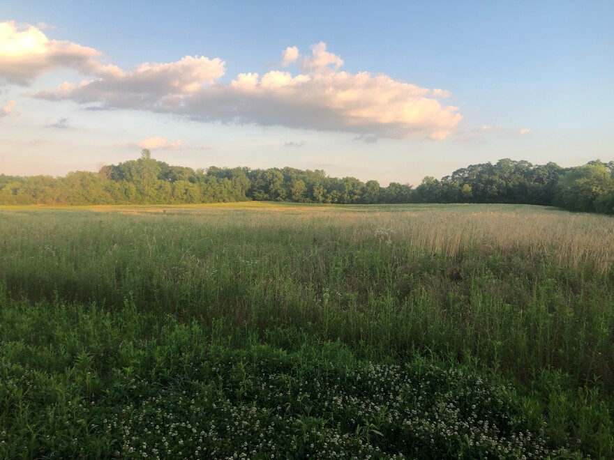 A cereal rye cover crop planted by Jason Ward at Glass Farm in Yellow Springs