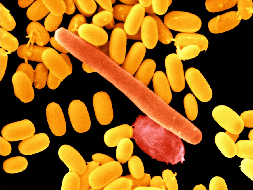 Infections with<em> Clostridium difficile, </em>a bacterium that is hard to treat with antibiotics, can trigger Medicare penalties for hospitals.