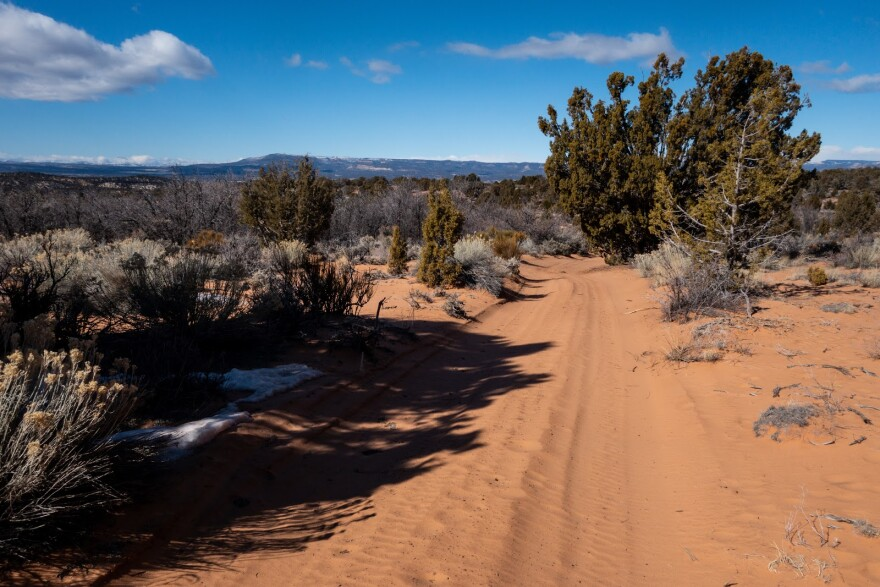 A sandy two-track road cuts through stands of pinyon pine and juniper trees.