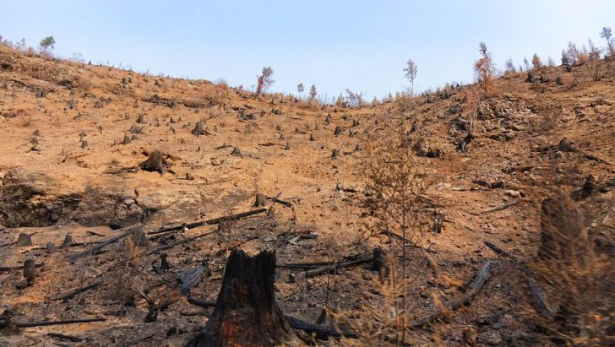 Burned tree farm Burns OPB.jpg