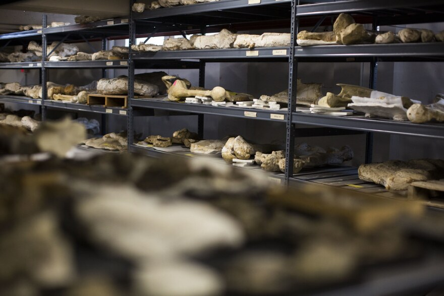 The Texas Vertebrate Paleontology Collection