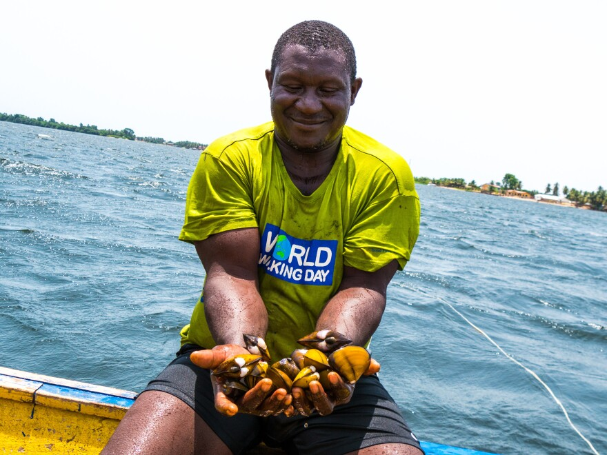 Peter Oklika, a clam digger, with a handful of freshly harvested clams. Oklika was among the first clam diggers in Ghana's Volta River estuary to have his plot mapped with GPS.