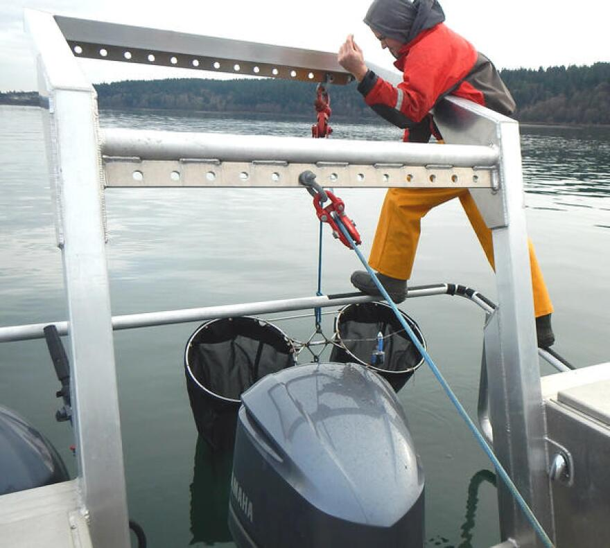 "Nisqually Tribe biologist Jed Moore lowers a ""bongo"" net to sample plankton in Puget Sound."