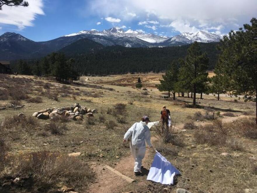 Dan Salkeld and Alyssa Beck drag flannel flags along trails in Rocky Mountain National Park. In one day, they collected nearly 100 ticks in the area.
