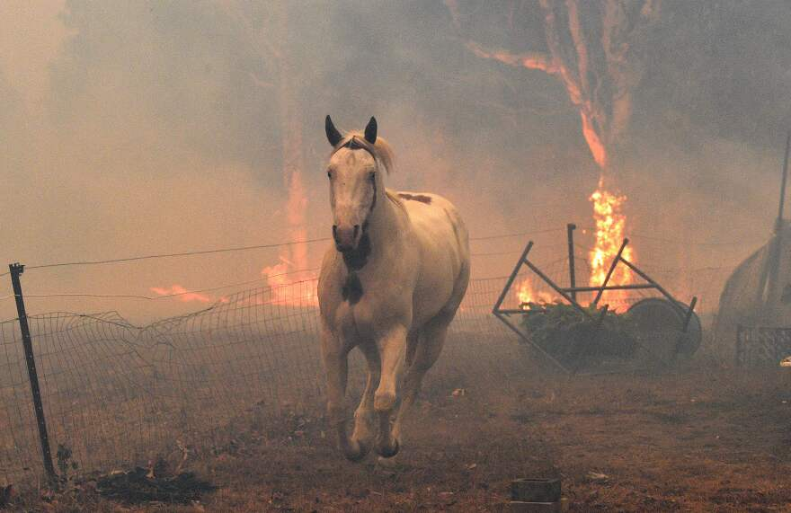 A horse moves away from a fire at a residential property near Nowra on New Year's Eve.