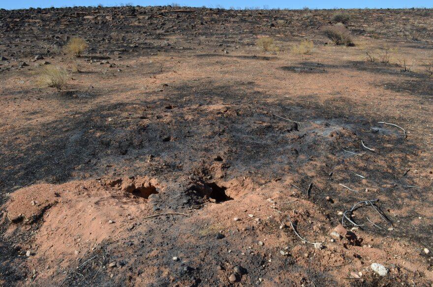Mojave Desert Tortoise Turkey Farm Fire Burn Scar LP.JPG