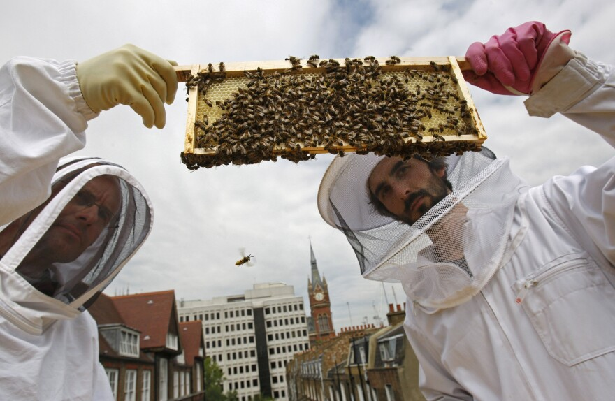 "Beehive designer Johannes Paul (right) and Natural England's ecologist Peter Massini, with a brood frame colonized with bees from the ""beehaus"" beehive on the roof of his house in London in 2009."