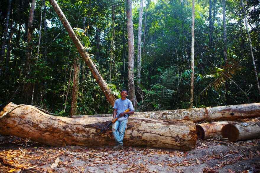 "Edivaldo ""Diva"" de Souza, one of the tappers, stands in a clearing in the forest among trees that have been felled illegally."