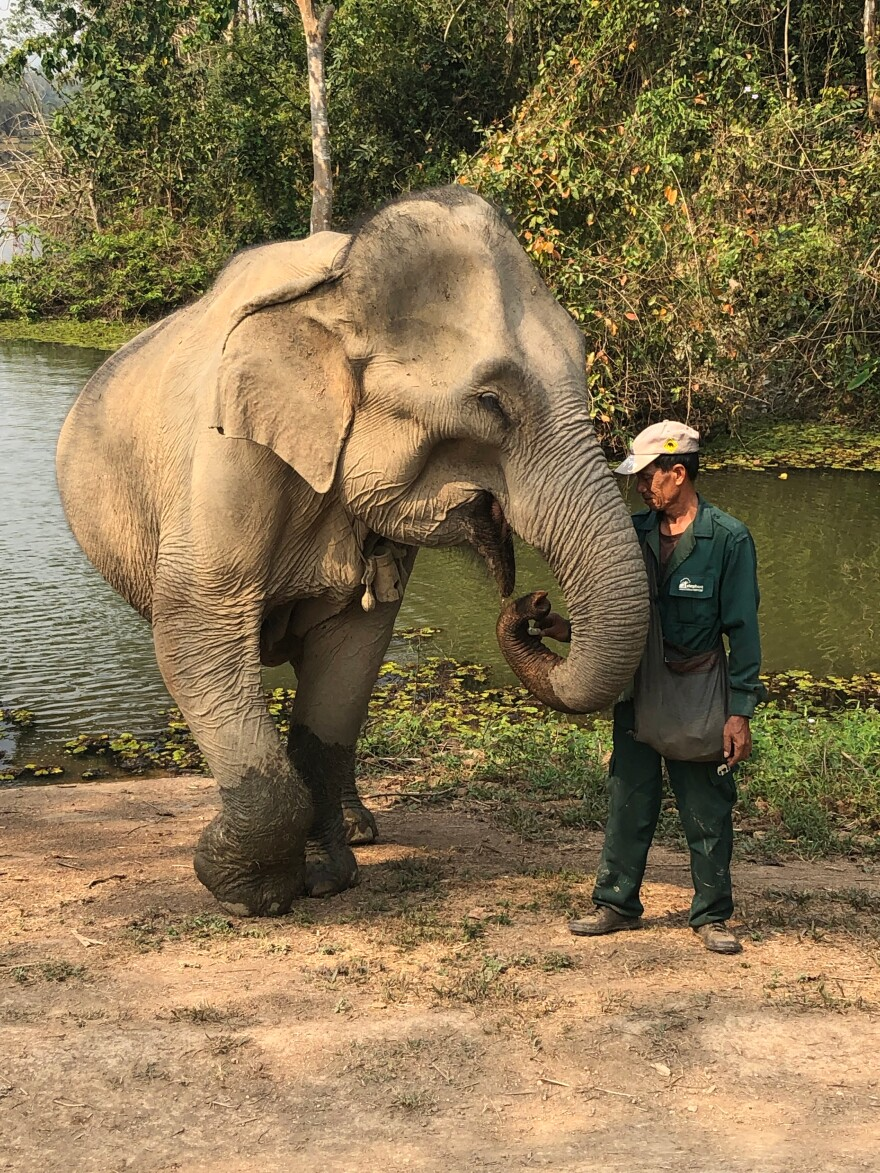 A mahout stands with his elephant at the edge of a watering hole. Each handler learns through the conservation center's mahout training program. It is said they share a special bond with their elephant.