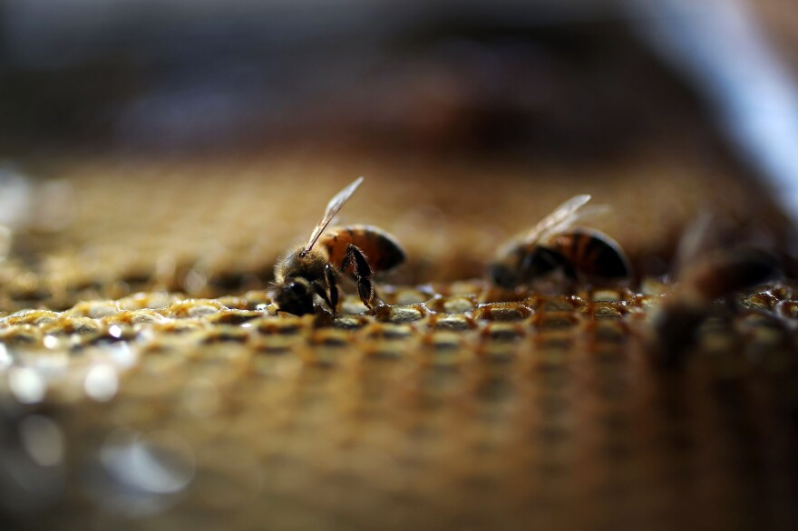 The White House announced an action plan Tuesday aimed at reversing dramatic declines in pollinators like honeybees, which play a vital role in agriculture, pollinating everything from apples and almonds to squash.