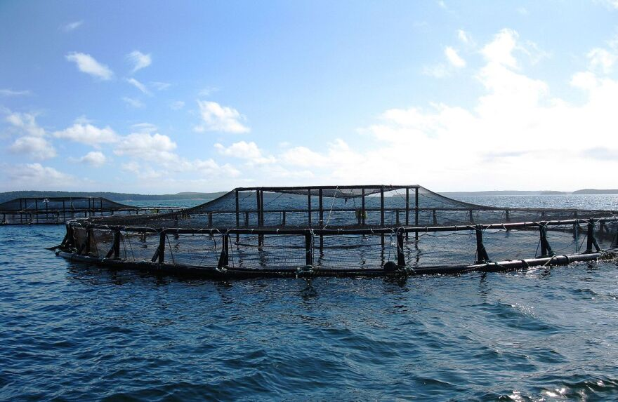 An aquaculture pen in the ocean off the coast of Maine