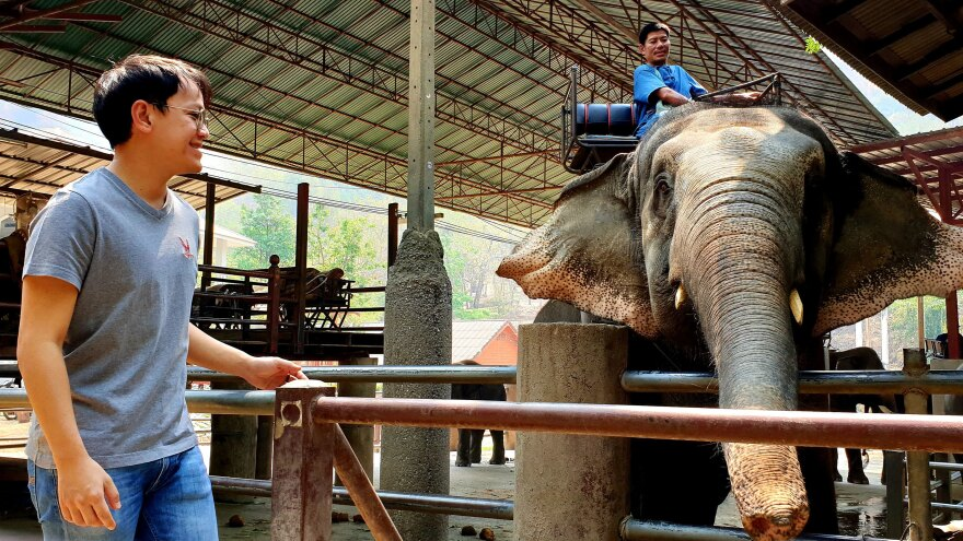 The Maetaeng elephant camp's general manager Borpit Chailert has vowed to keep paying mahouts at half-salary and feeding the elephants for as long as possible while the camp is closed. There are 85 elephants at the camp.