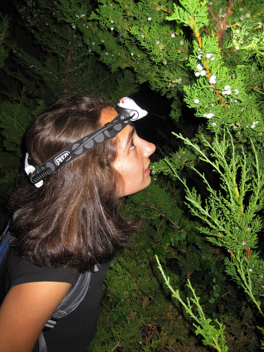 Laurel Symes on the hunt for crickets.