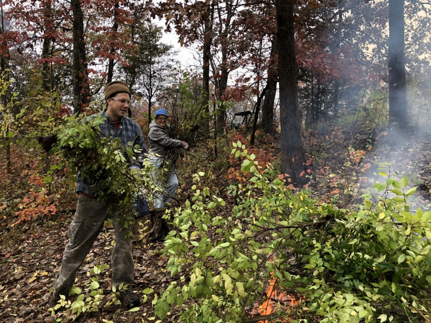 Matthew Albrecht (at front), associate scientist at the Garden's Center for Conservation and Sustainable Development, and volunteer Eva Adams help during a honeysuckle sweep workday at Shaw Nature Reserve in 2018.