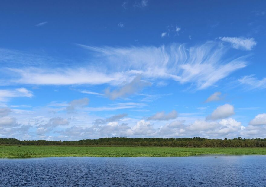 View of the Ocklawaha River's Rodman Reservoir