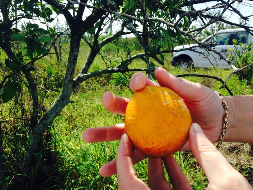 orange_zoom.jpg