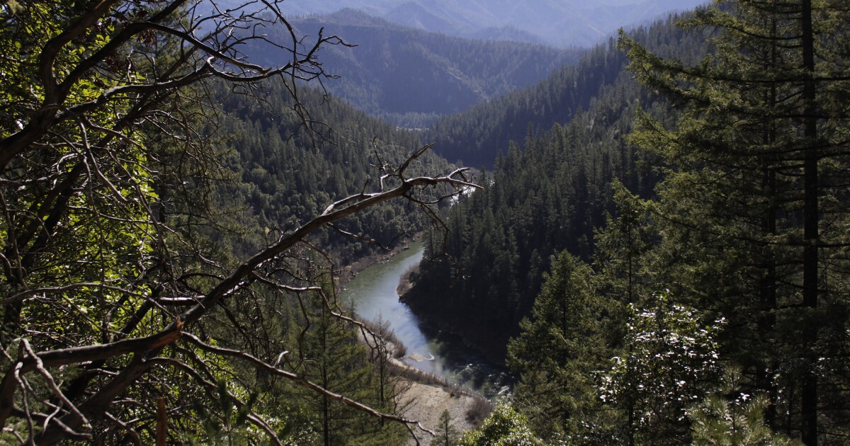 California's Plan To Offset Emissions Using Forests May Have A Major Flaw