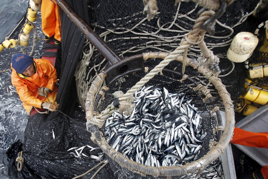 A fisherman pulls a basket filled with anchovies aboard a fishing boat off of Peru's northern port of Chimbote, in 2012. Peru is the world's top fishmeal exporter, producing about a third of worldwide supply.
