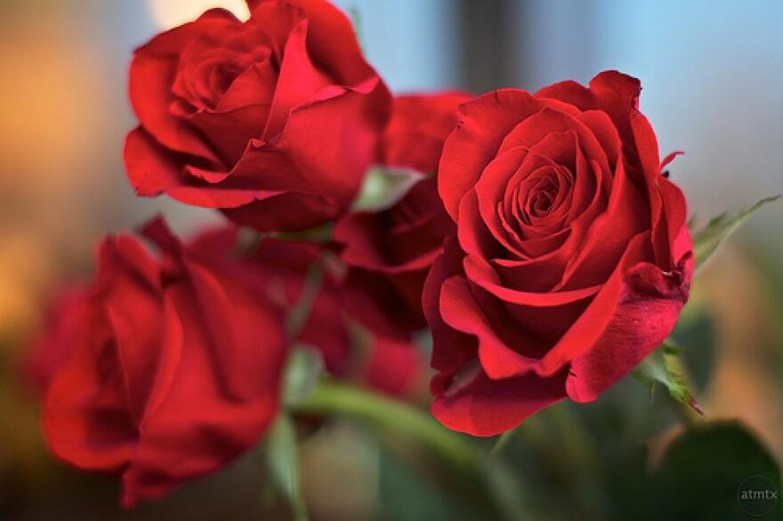 roses.atmtx_.jpg