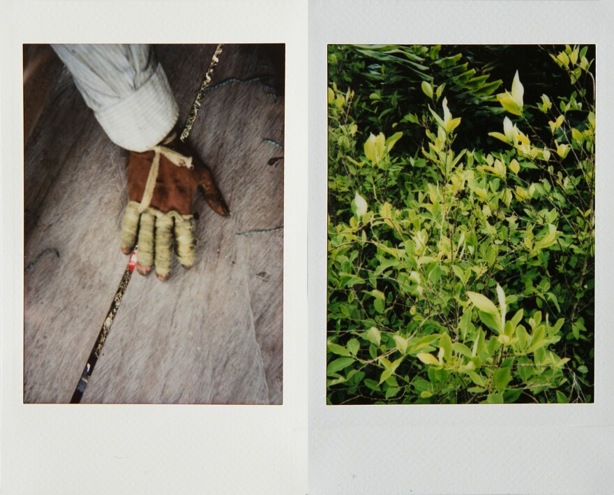 Left: The hand of a <em>raspachín</em>, a worker who collects the leaves of coca plants. Right: Coca plants in Nariño.