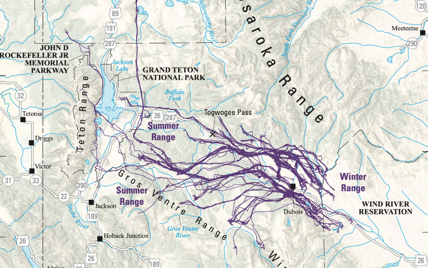 """Part of a map showing migration routes of the Dubois, Wyo. mule deer population, taken from """"Ungulate Migrations of the Western United States, Volume 1."""""""