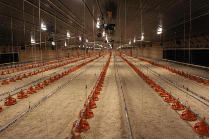 One of the first barns where Costco chickens will be raised in Nebraska.