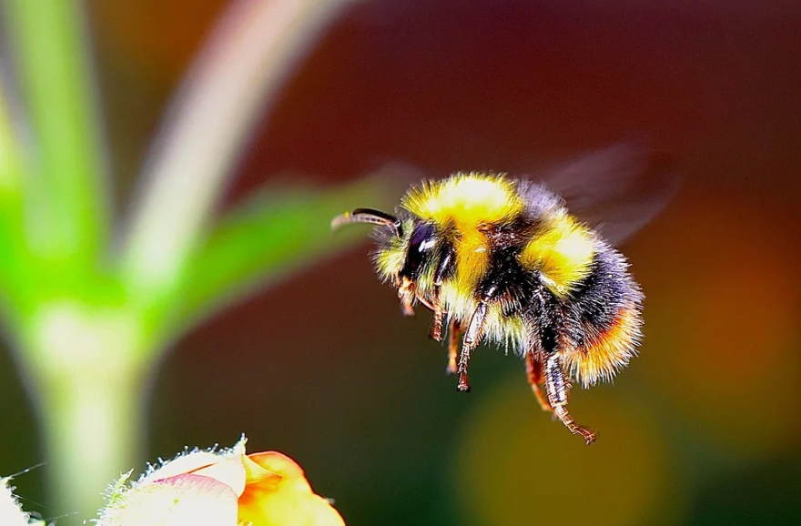 bumble_bee_flower.png