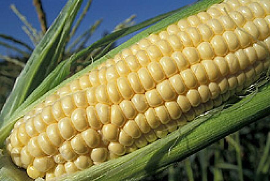 corn USDA by Doug Wilson.jpg
