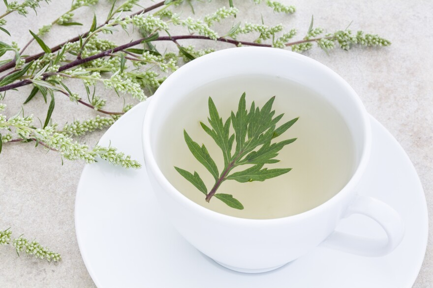 Tea made from the wormwood plant. Wormwood tea has been used as a remedy for fever, liver and gall bladder ailments — and now it's being tested for the flatworm infection schistosomiasis.
