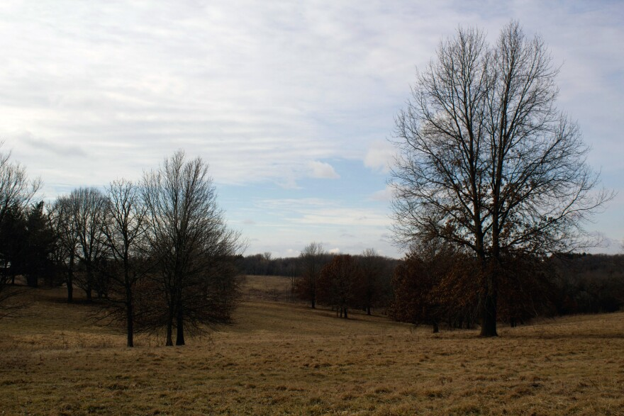 This part of Fleming's land is an in-process restoration of oak savannah, a native Iowa grassland that includes some trees.