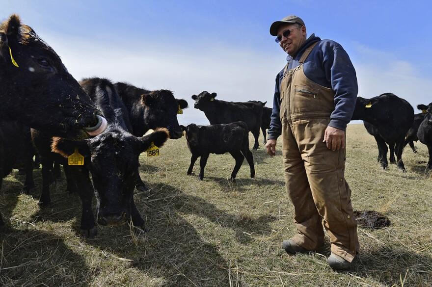 011515_Checkoff_Pfrang-cows.jpg
