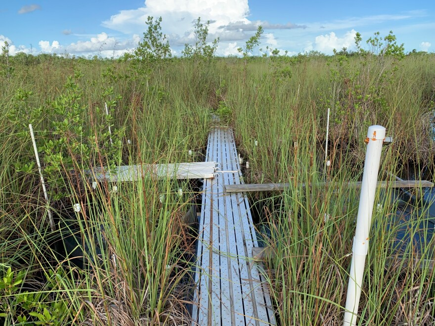 Florida wants to take over permitting wetlands from the U.S. Army Corps of Engineers, drawing criticism from environmentalists who worry more wetlands will be lost.