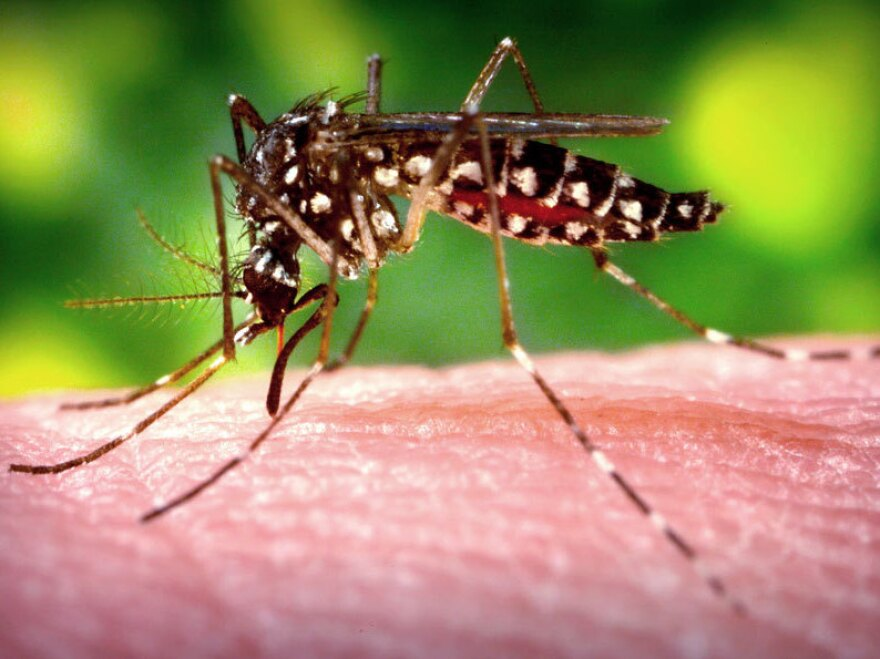 The mosquitoes that feed on people are attracted to over 300 gases and other compounds emitted by human skin.