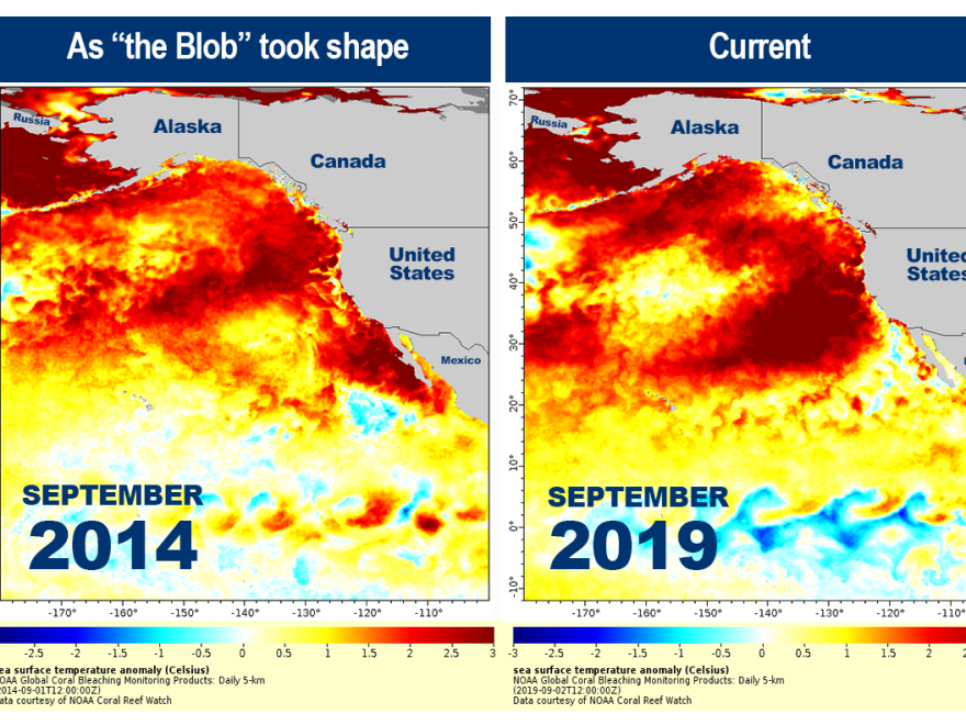 Sea surface temperature anomaly maps show temperatures above normal in orange and red. The warming could lead to dire conditions for sea life.