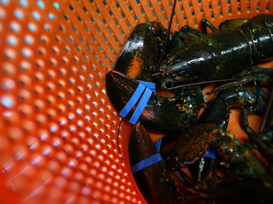 Charlotte Gill, owner of Charlotte's Legendary Lobster Pound in Maine, says she believes that cannabis can calm crustaceans before they are tossed into boiling water.