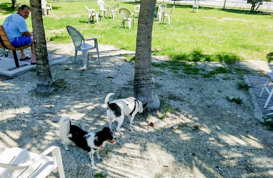 small_dog_park-2_0.jpg