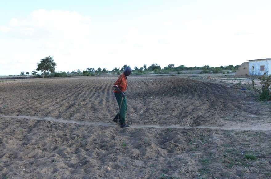 A farmer walks on his parched land in Chivi, Zimbabwe, in January.