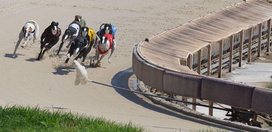640px-Dogs_racing_around_first_turn_derby_lane.jpg