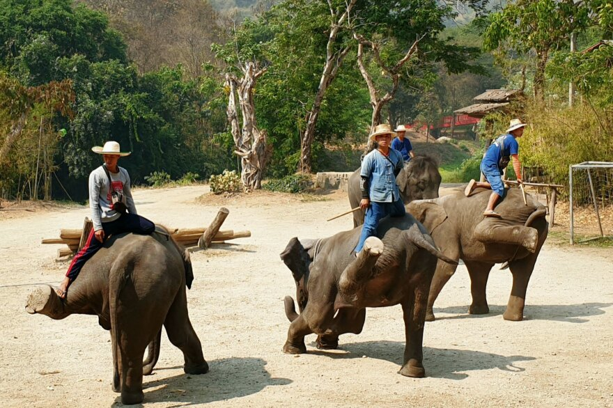 Elephants and mahouts perform one of the last shows at the Maetaeng Elephant Camp in Chiang Mai before it shut last month.