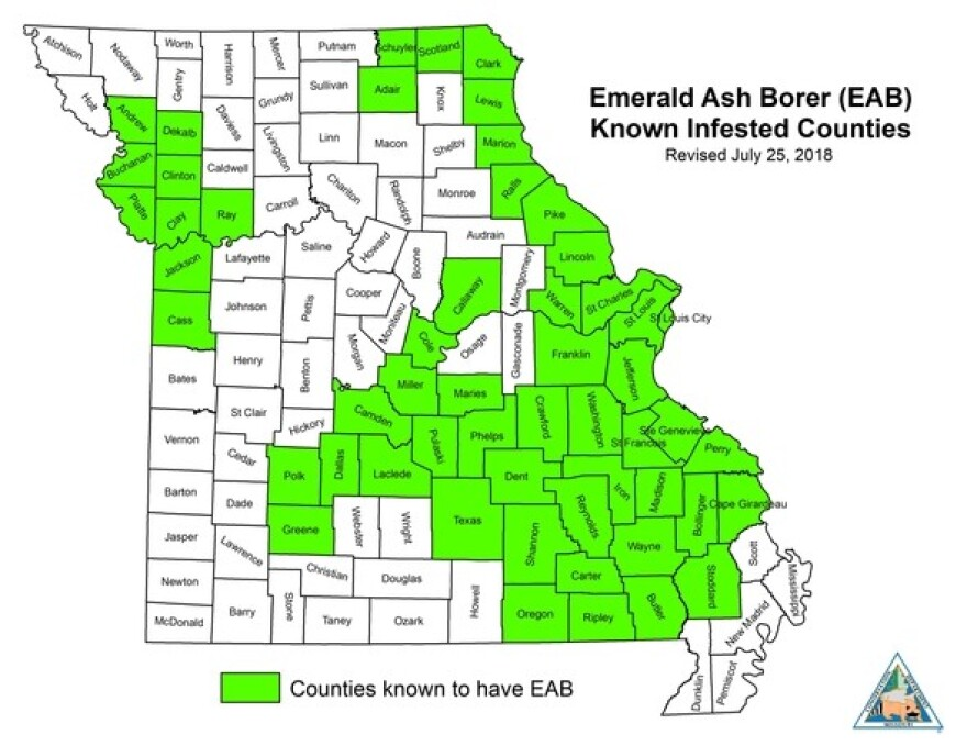 Humans have inadvertently aided the spread of the emerald ash borer by moving firewood from place to place.