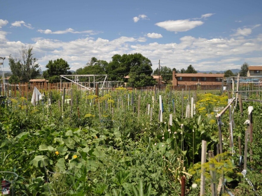 One of the community gardens divided up into individual plots run by Denver Urb Gardens.