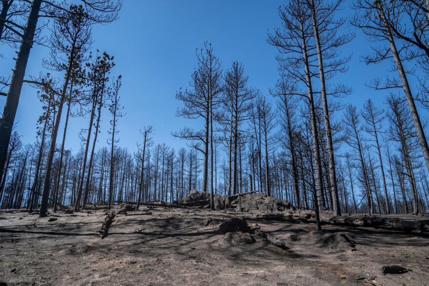 Burnt area of the Cameron Peak Fire