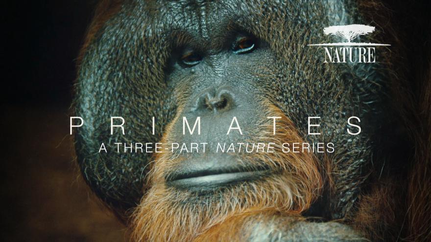 Nature Primates