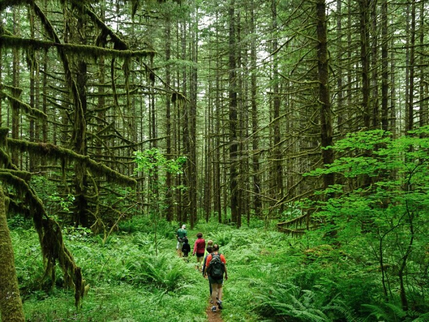 forest_w_hikers_-_loren_kern_flickr.jpg