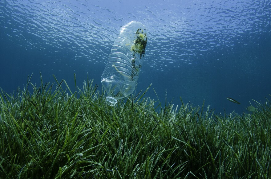 Plastic Bottle Floating Above Sea Grass