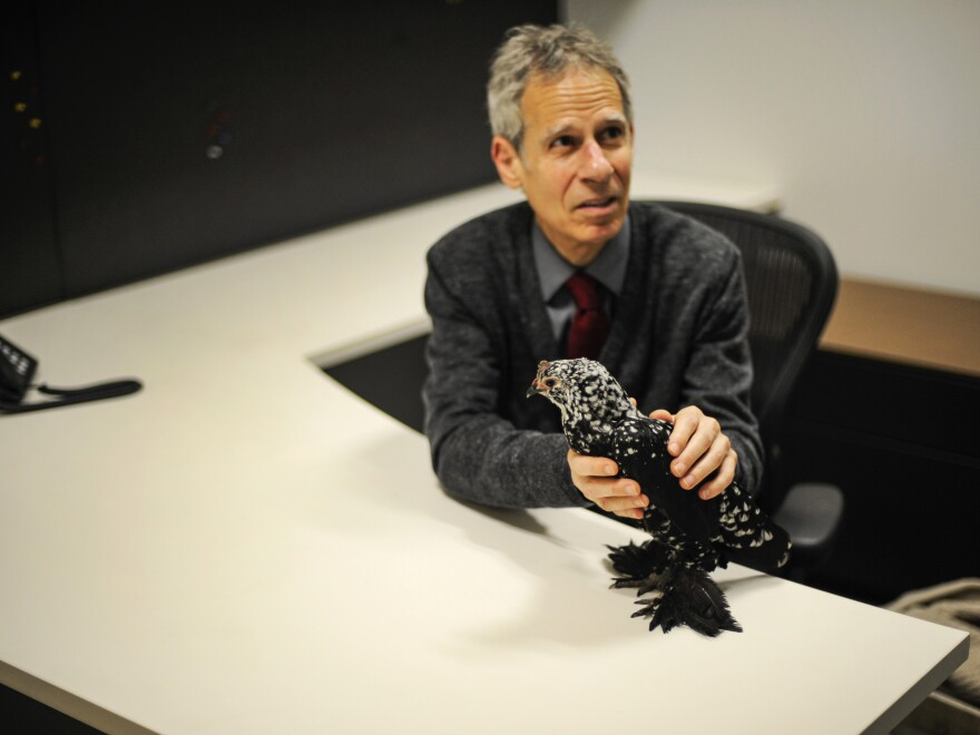 Goats and Soda Editor Marc Silver tried to interview the rescued hen, but she wouldn't make a peep.