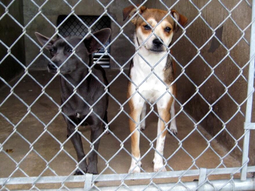 Dogs at Town Lake Animal Center