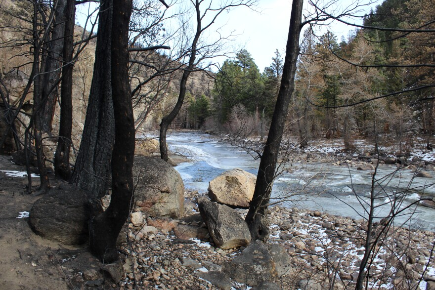 Charred trees line the Poudre River in the Cameron Peak burn scar.