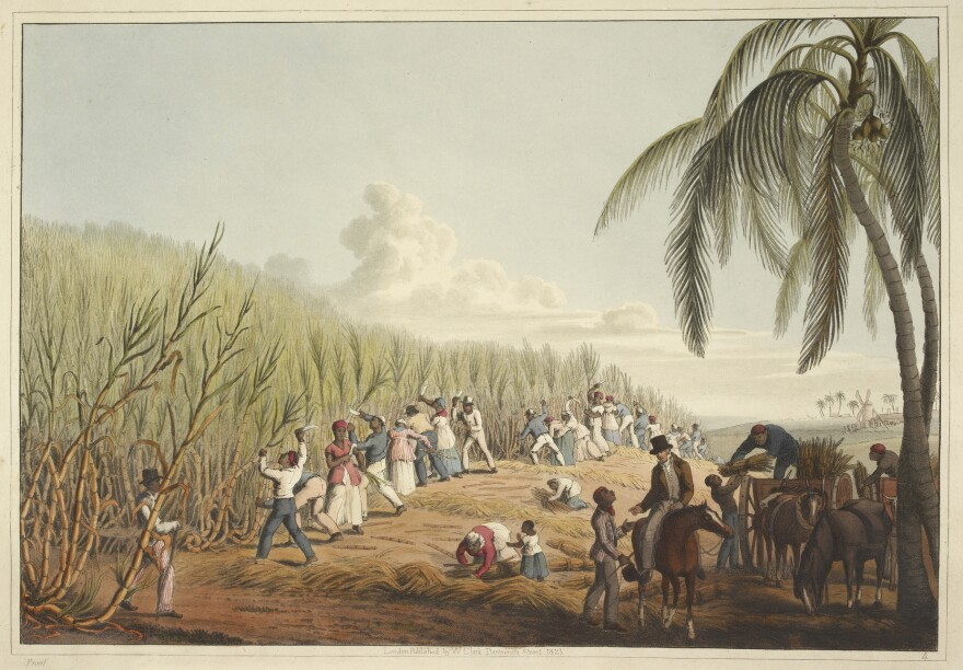 An illustrations shows slaves cutting sugar cane on the island of Antigua.