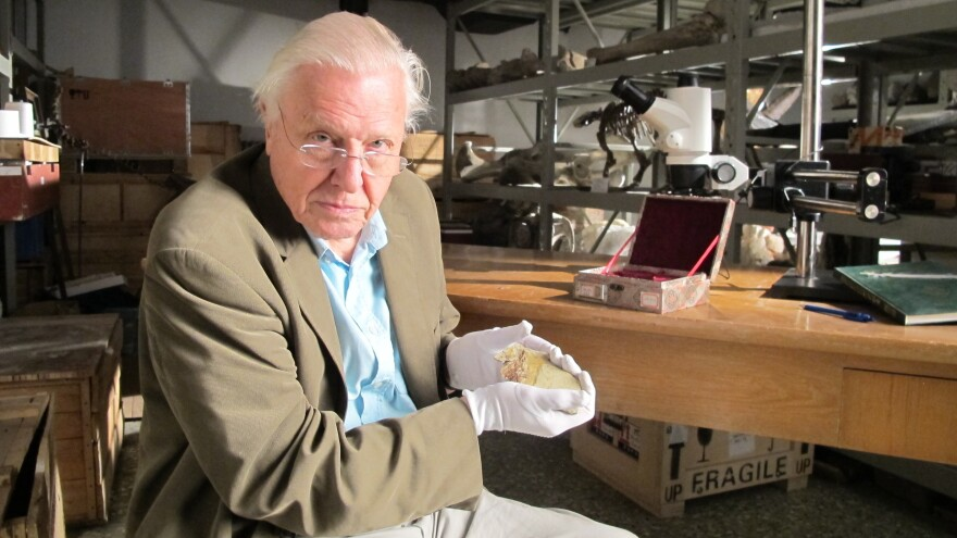 Sir David Attenborough at the Beijing Museum of Natural History with fossil of <em>Juramaia</em>, as featured in the Smithsonian Channel series <em>Rise of Animals: Triumph of the Vertebrates.</em>